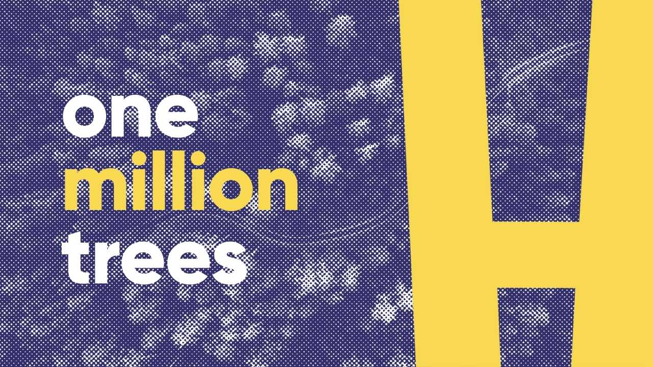 planting one million trees in the honest forest